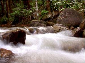 Ulu Bendul Recreational Forest